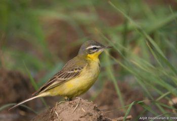 bird-43