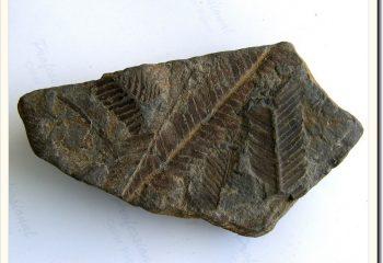 fossil-park-12
